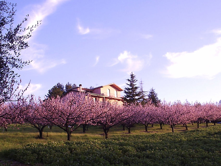 View of the property with apricots tree