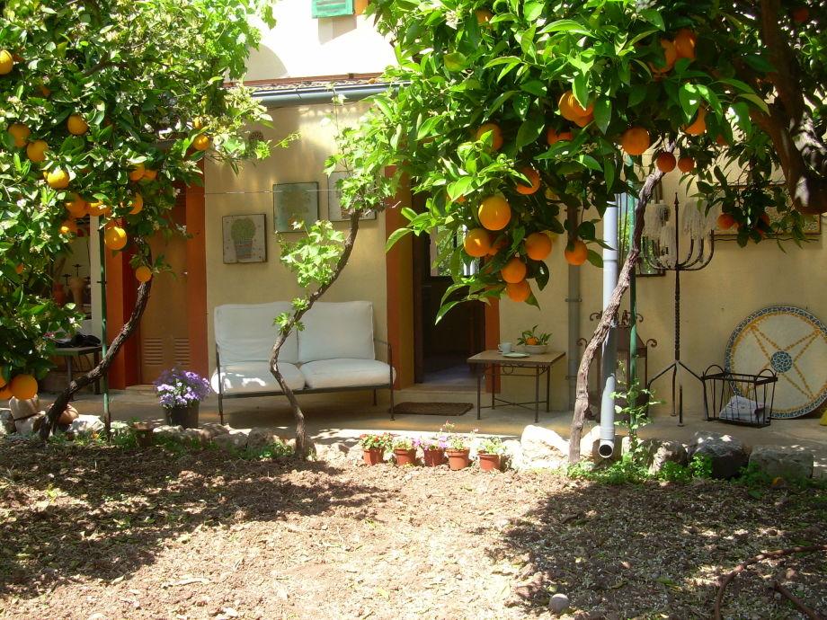 Inmitten einer Orangenplantage
