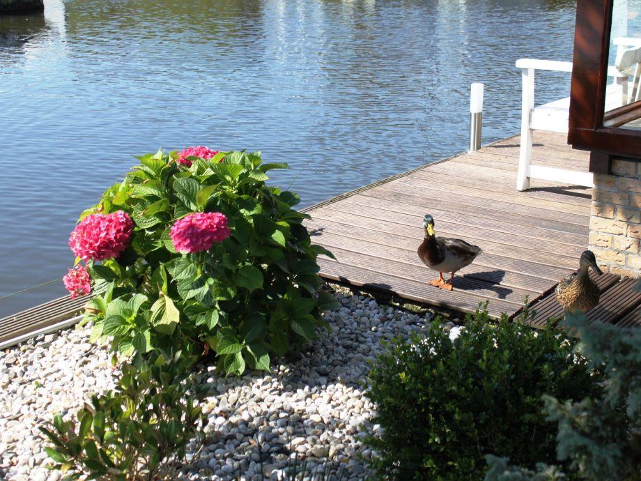 chalet am wasser wintergarten sportboot ijsselmeer. Black Bedroom Furniture Sets. Home Design Ideas