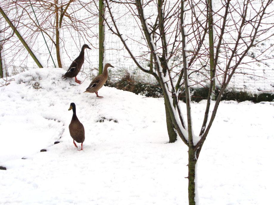 """Unsere """"Laufis"""" haben ihren ersten Schnee"""