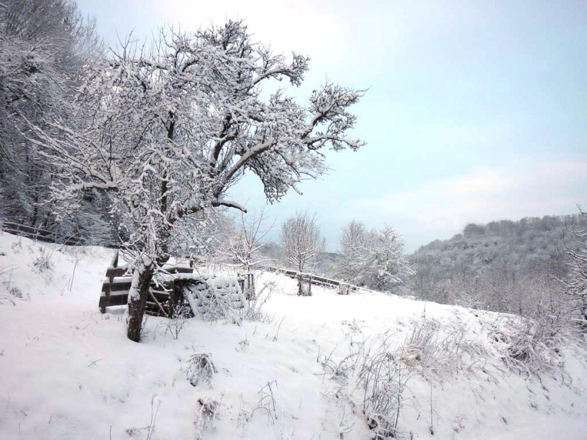 Ferienwohnung delattre bettingen frau regina delattre - Garten im winter ...