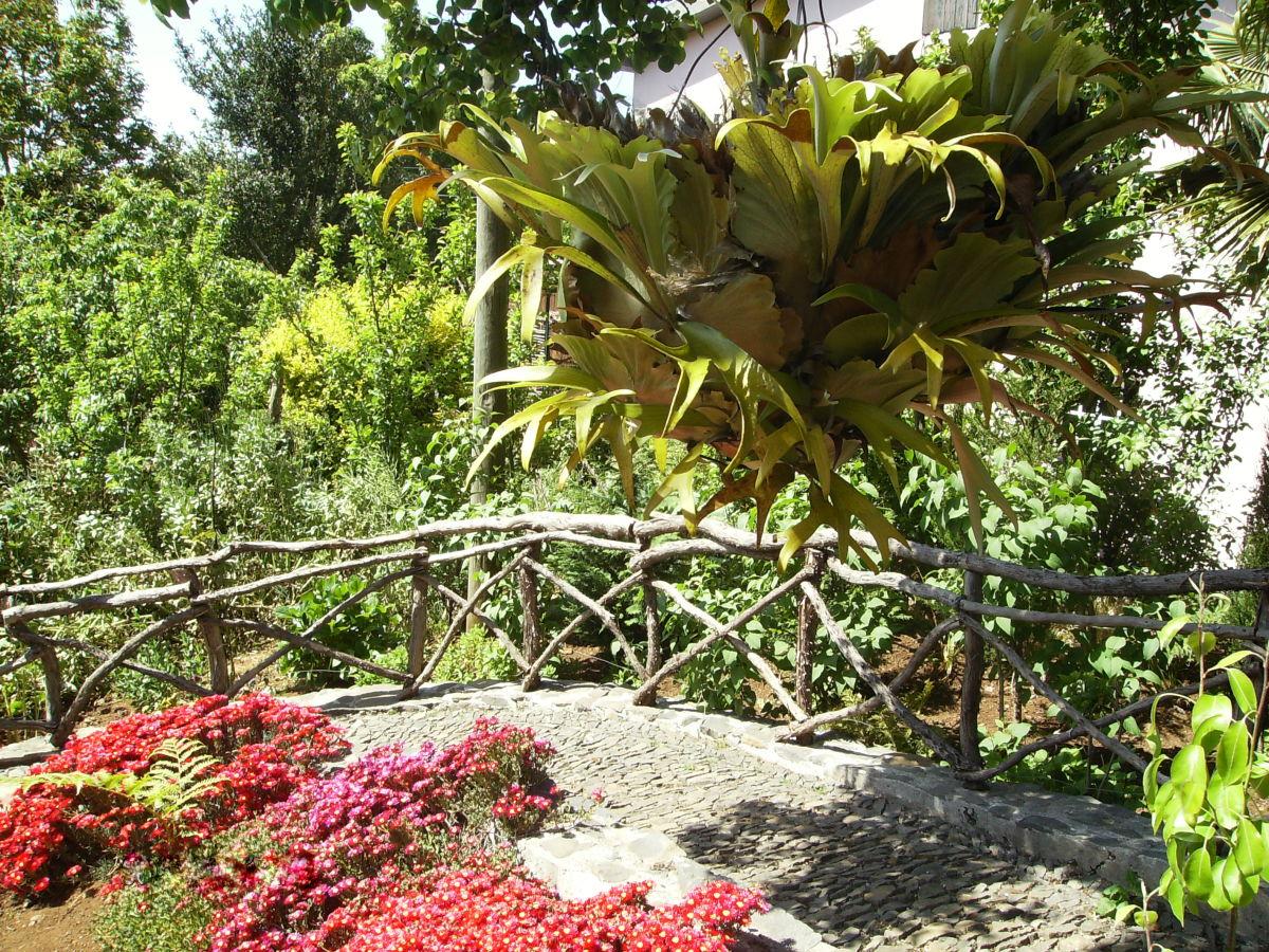 Ferienhaus casa rosa camacha madeira portugal firma check in individuelle flugreisen gmbh - Einheimische pflanzen im garten ...