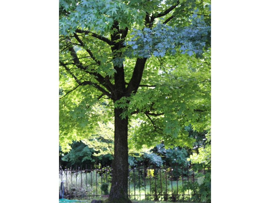 Baum im Garten von Casa Artuico