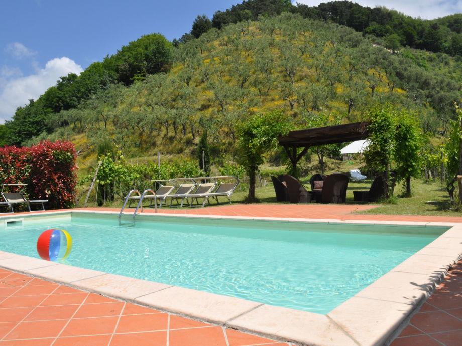 Pool mit Olivenhain