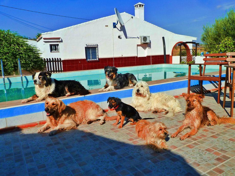 Urlaub mit Hund am Pool
