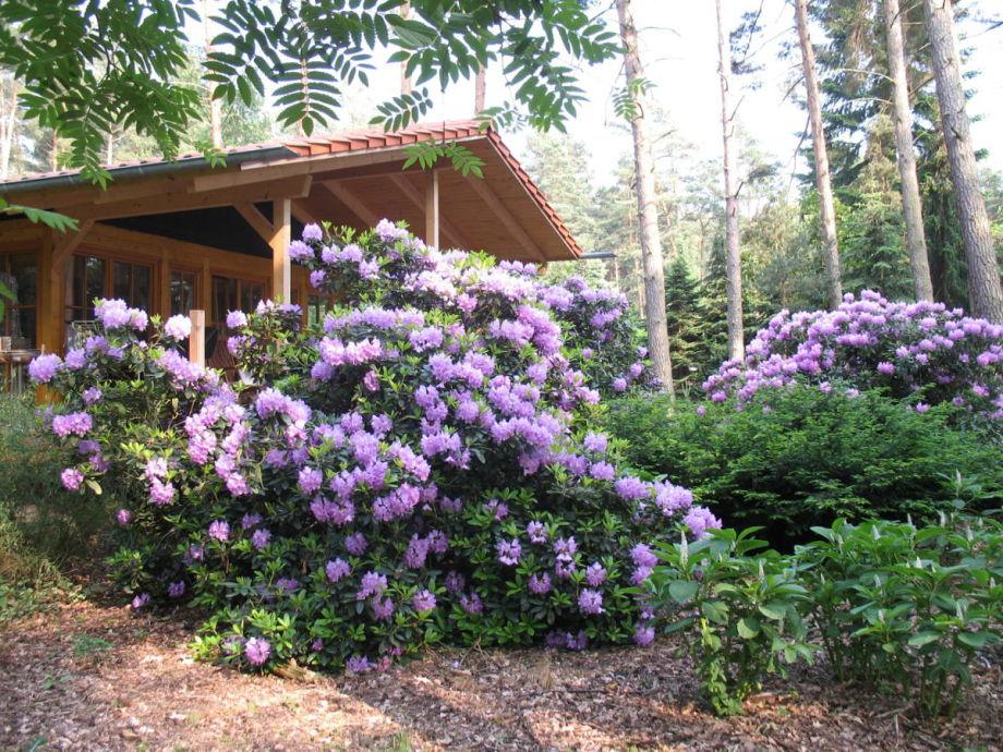 Ferienhaus Schulmeister Schmidt - ein Traum aus Holz