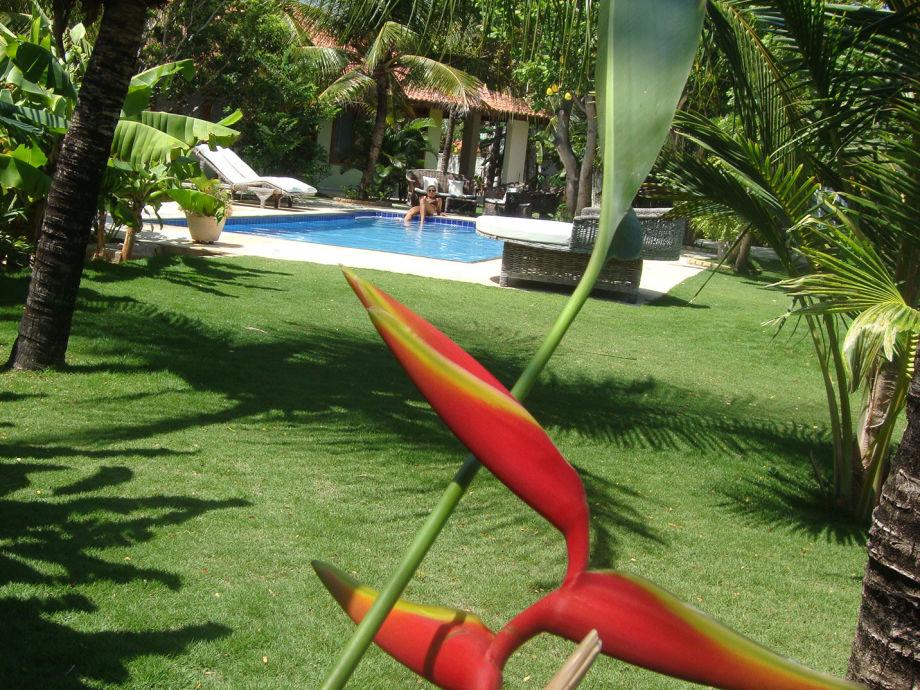 Schöner tropischer, nicht einsehbarer Garten mit Pool