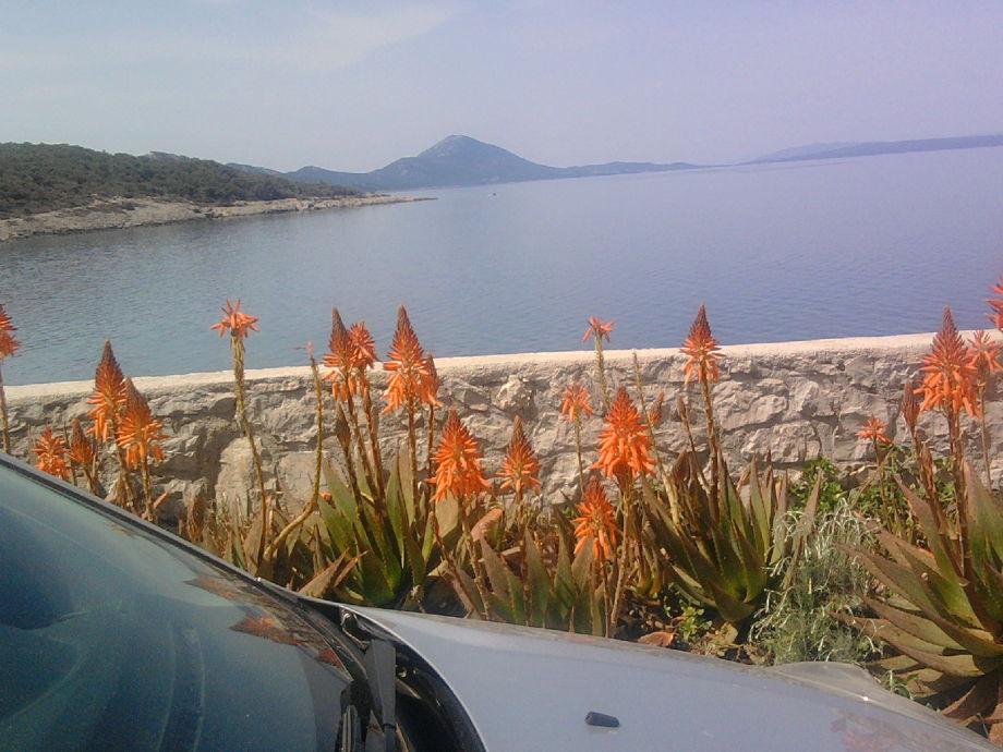 Meerblick vom Parkplatz und Aloe Blumen