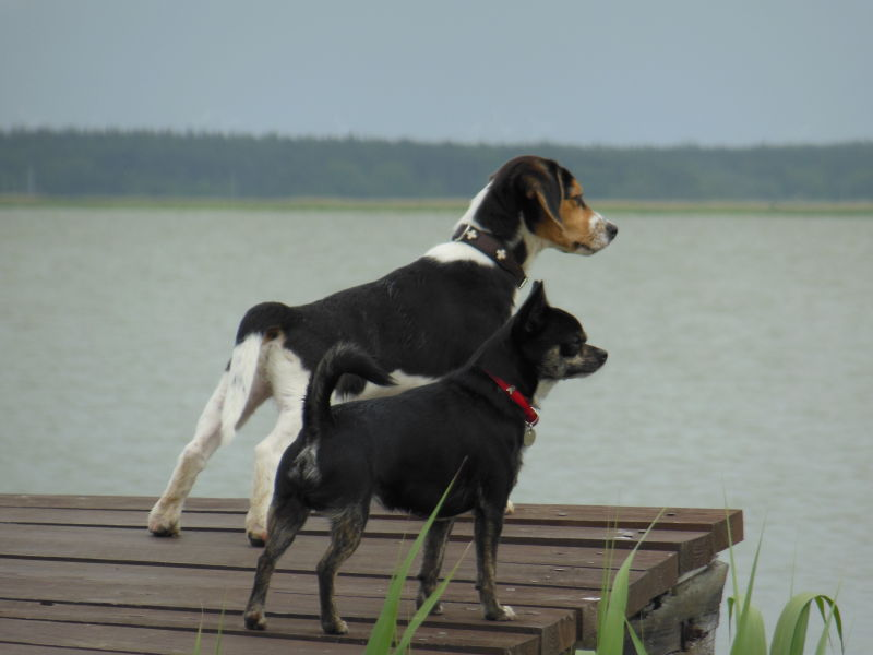 Ferienwohnung Ostsee mit Hund