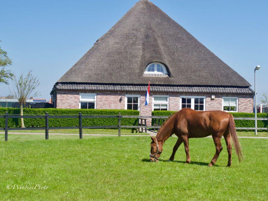 Bauernhof mit pferd