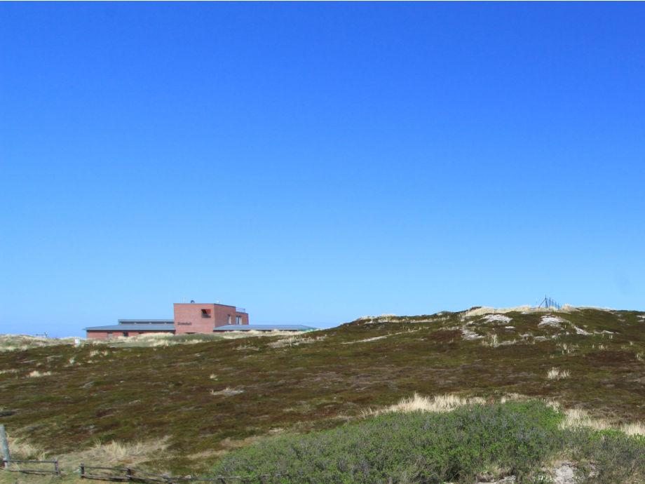 Aussicht aus dem Haus: Ruhige Lage mit Dünenblick