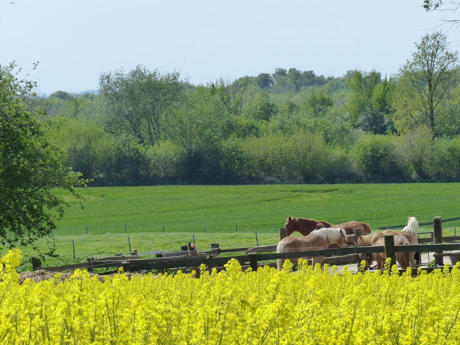 Ferienhof Fraulund Rabs-Pferdekoppel