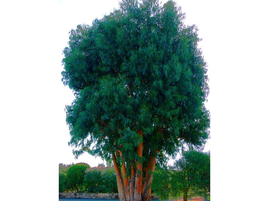 ferienwohnung soleil couchant im haus les eucalyptus. Black Bedroom Furniture Sets. Home Design Ideas