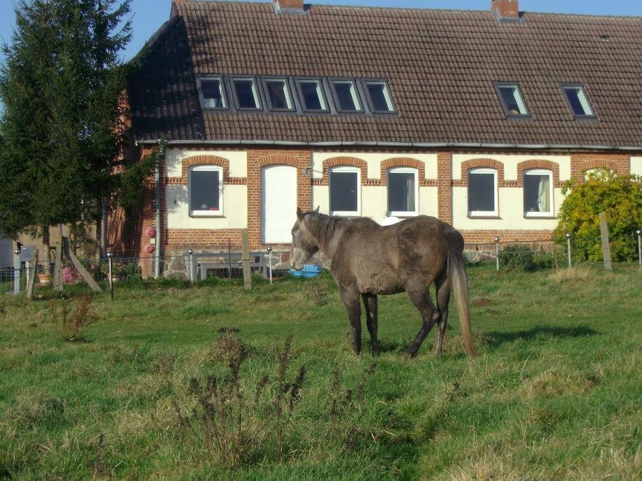 2 Ferienwohnungen im Landhaus Moor