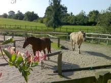 Bauernhof Wiesenwohnung