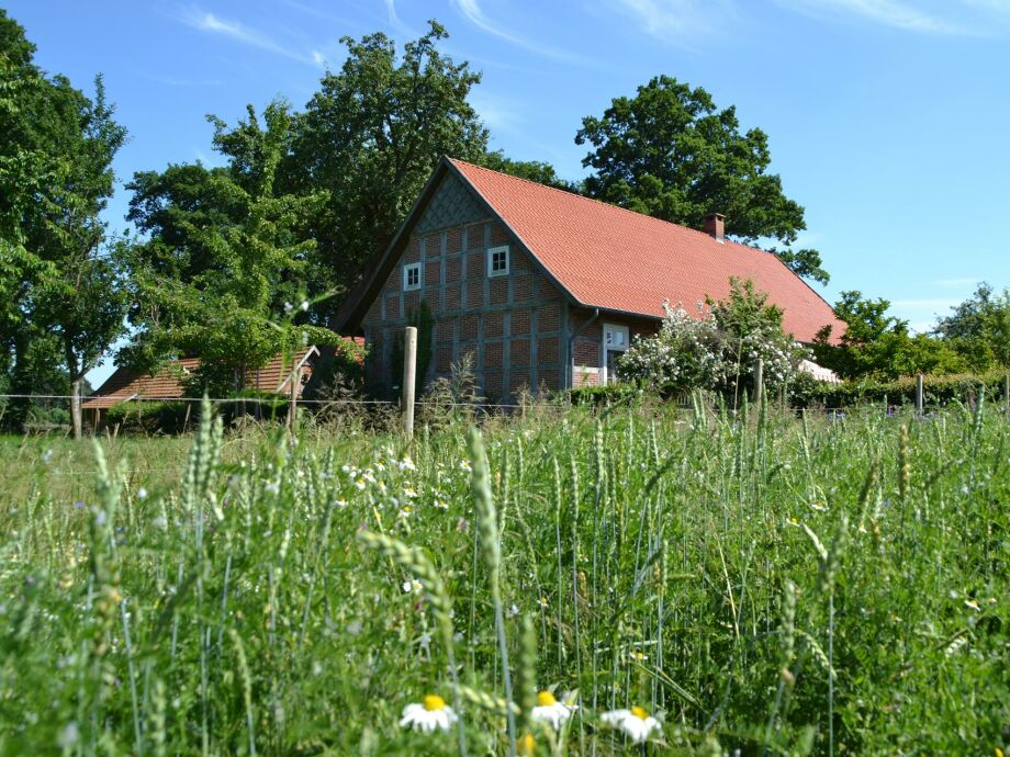 Grün neben dem Ferienhaus