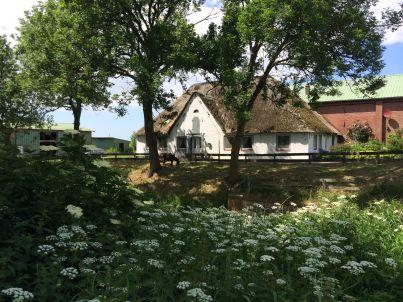 Bauernhof Schwarzes Schaf