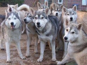 Husky-Farm Ferienwohnung