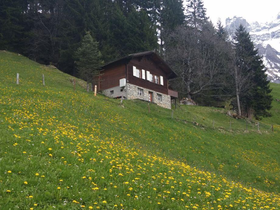 Ferienhaus Ahorn Hirzboden