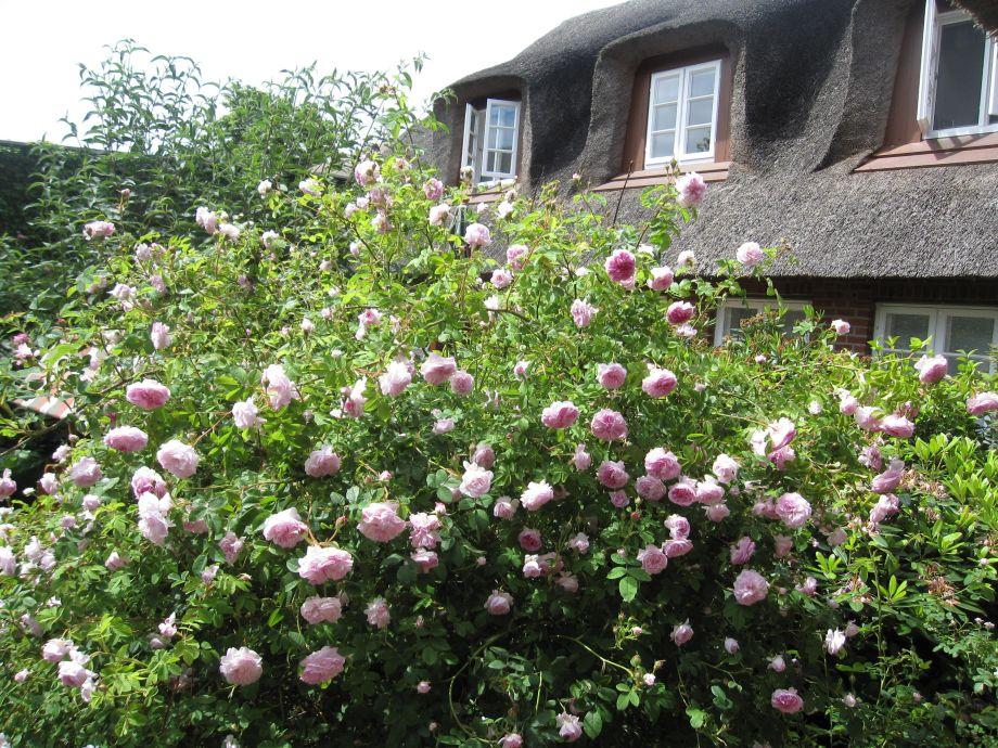 """Hinter den Rosen liegt ihre """"Frühstücksterrasse"""""""