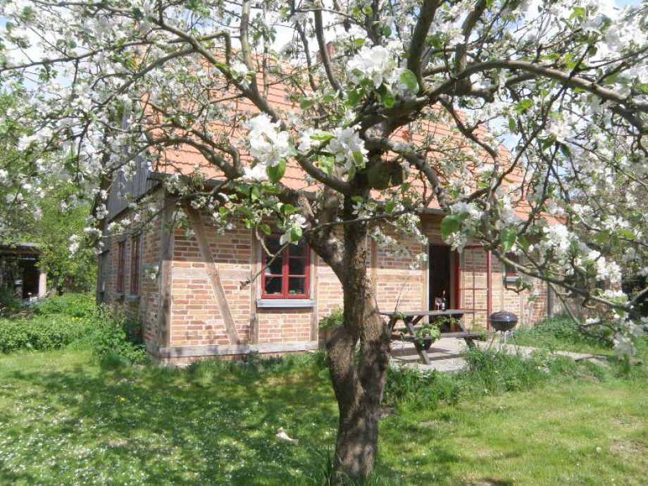 Ferienhaus in Tressow Apfelhof und Südterrasse