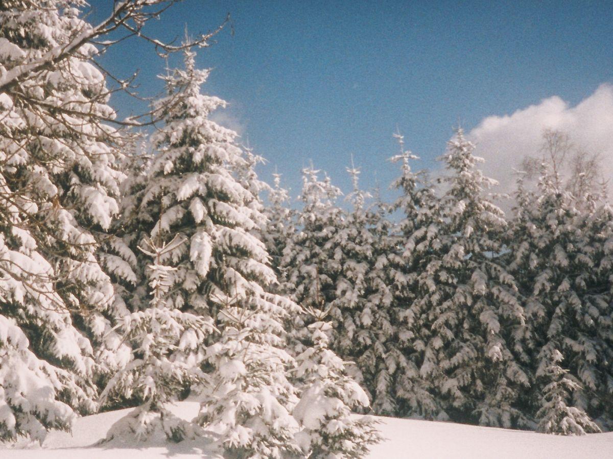 Ferienwohnung schulze bayerischer wald neureichenau herr gert schulze - Garten im winter ...
