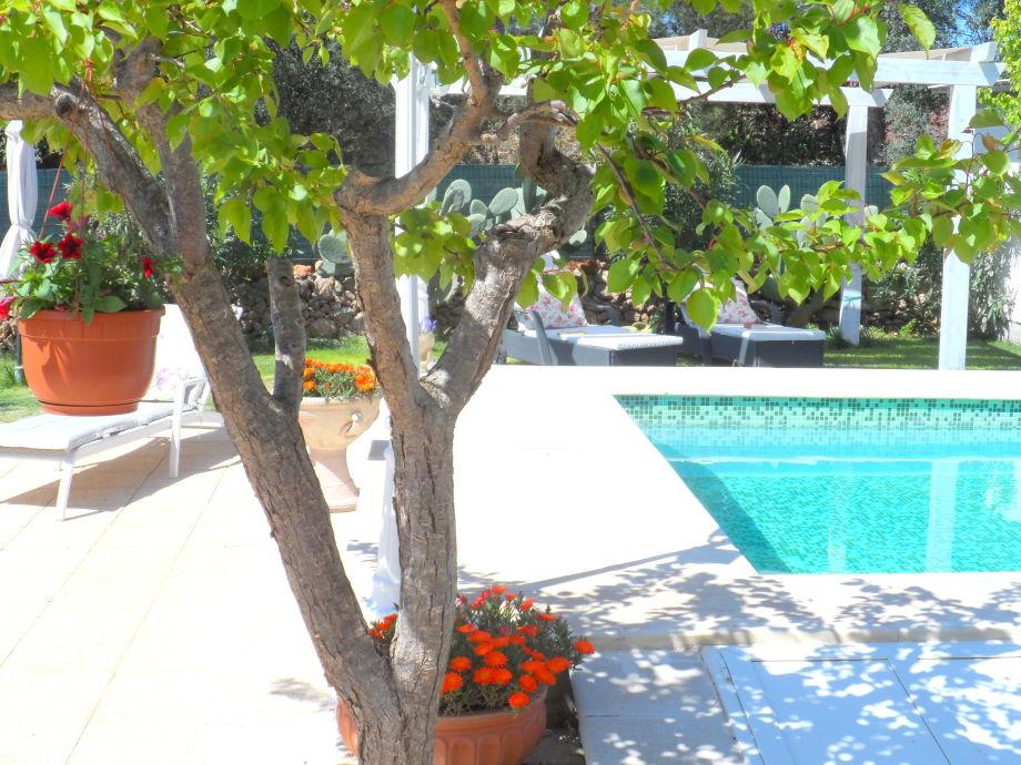 Pool mit Garten und Terrassen