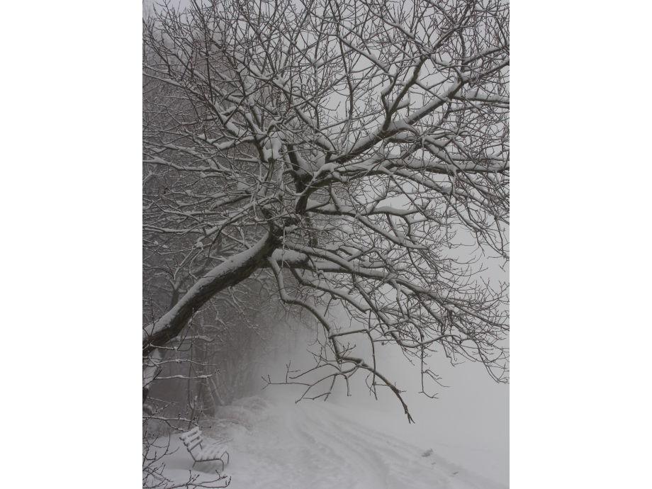 winterliche Ruhe