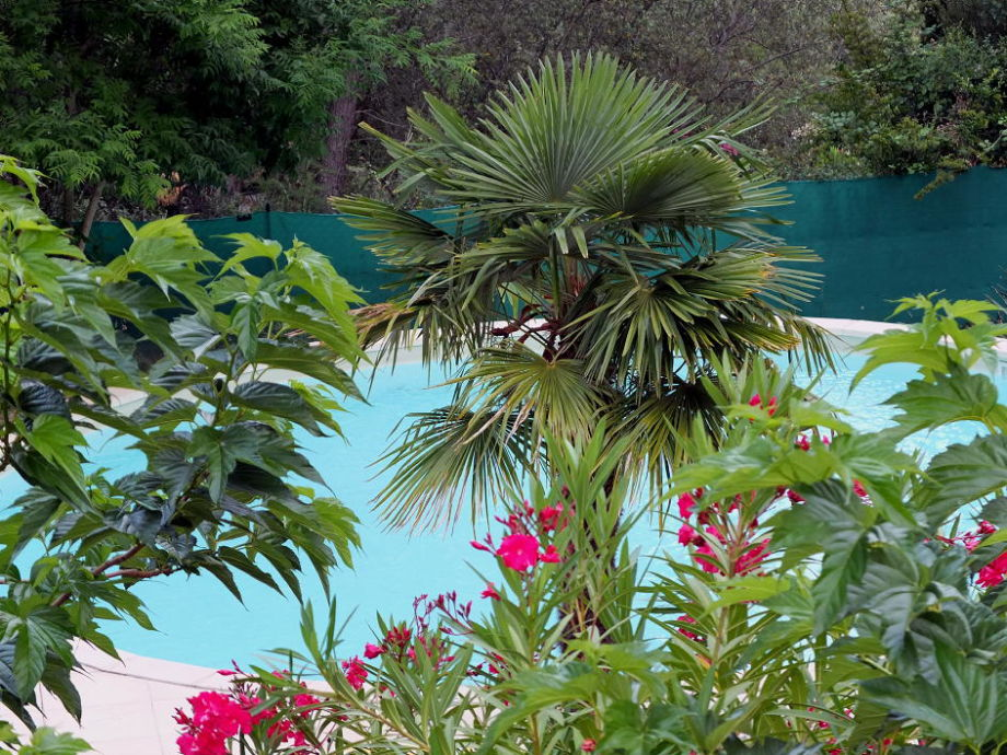 Villa mit Pool in Figanières en Provence, ruhigste Lage ...