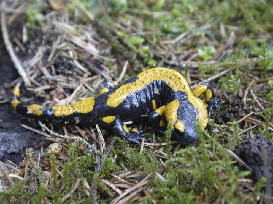 ... Salamander Kuche Salamander K 252 Che Preis Logisting Varie Forme Di ...