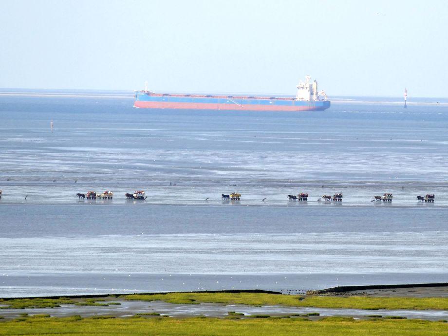 Mit Blick auf die Kutschwagen zur Insel Neuwerk