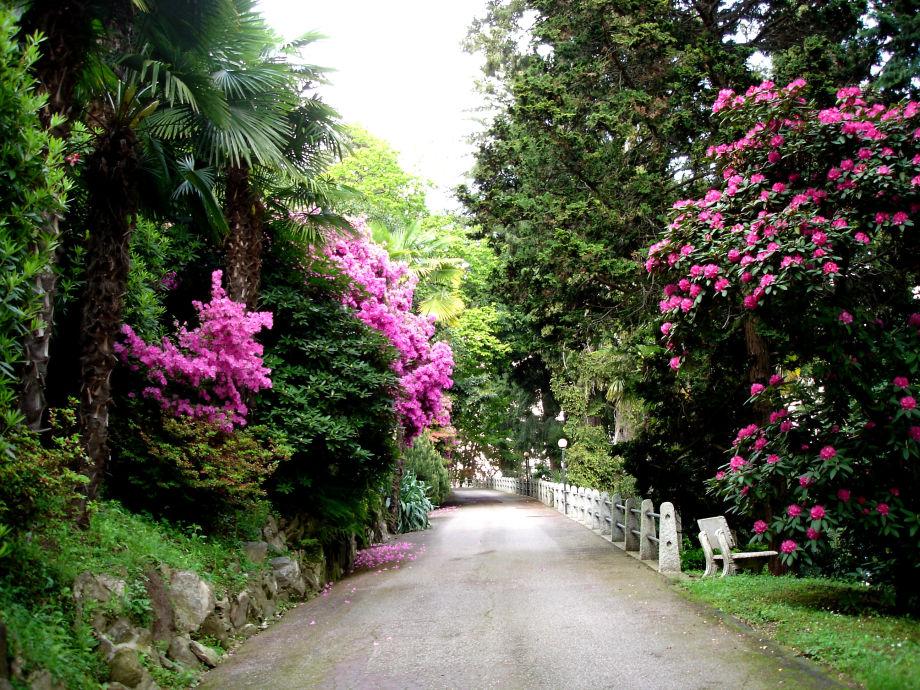 Blühende Büsche am Weg zur Ferienwohnung