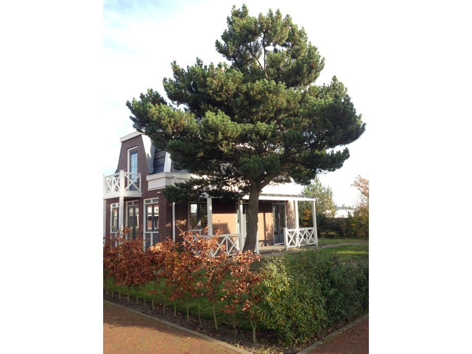 Ferienhaus Tulp & Zee Nr. 12