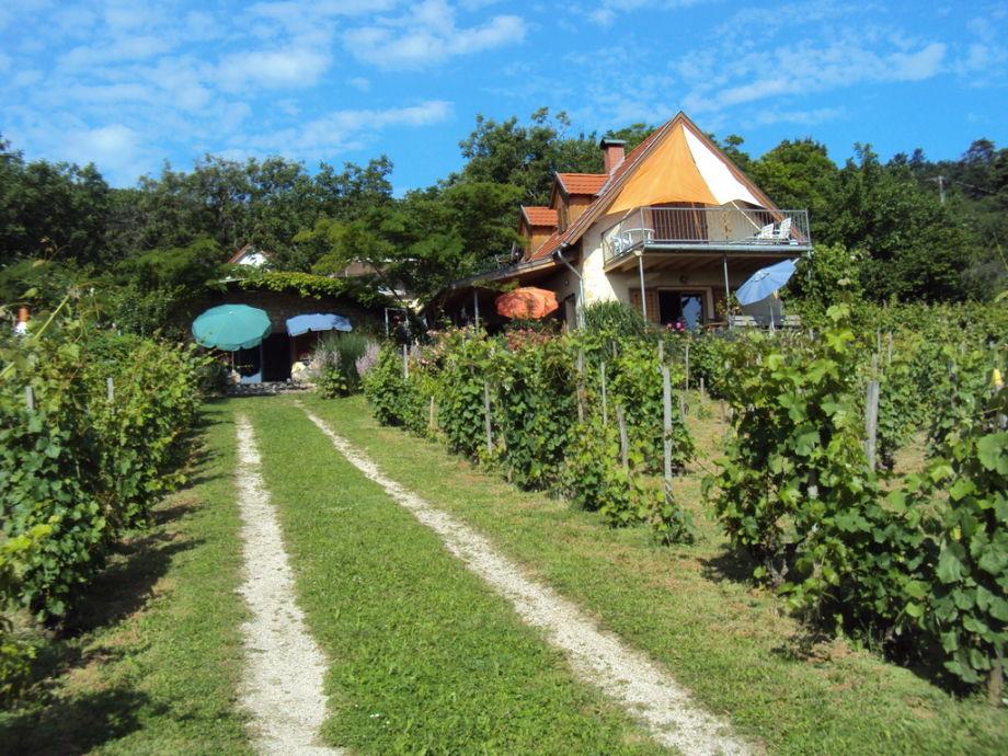 Traublickhaus mitten im Rebengarten