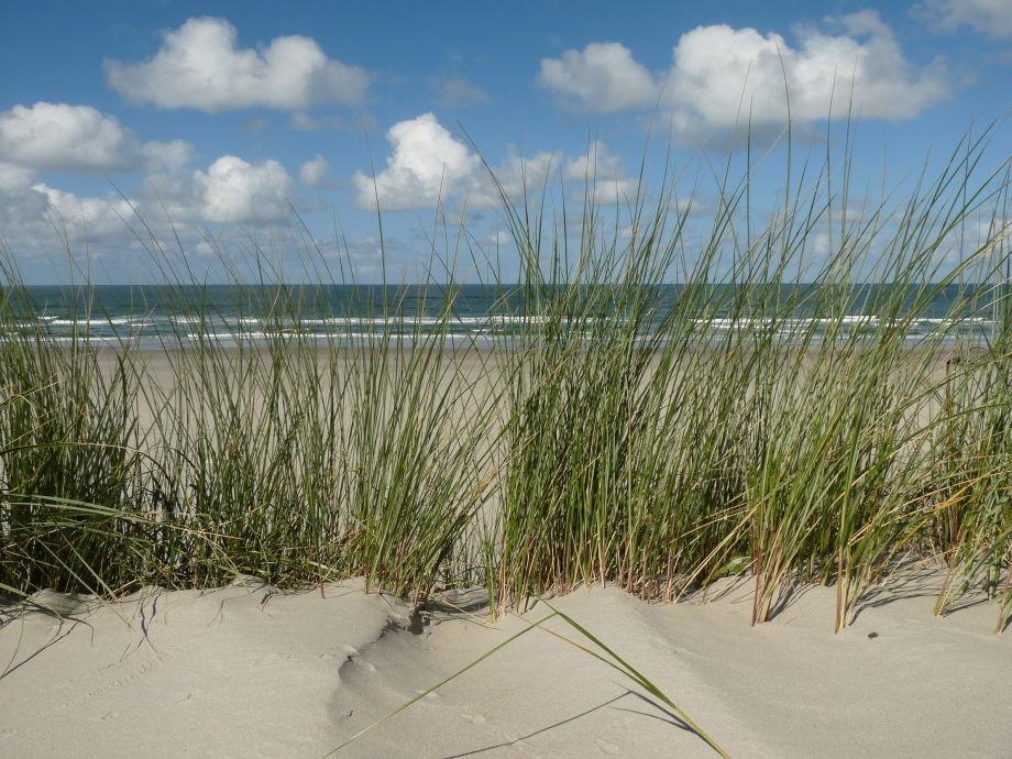 Ferienwohnung Panorama Meerblick Cuxhaven Direkt Vorne Am Strand Cuxhaven Frau Iris Jankun