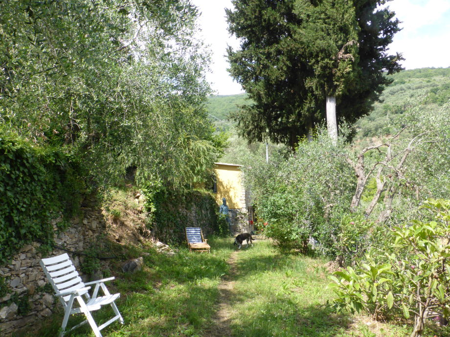 The path to the house and the sunny garden