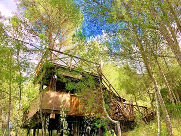 Ferienhaus Pinewood Lodge