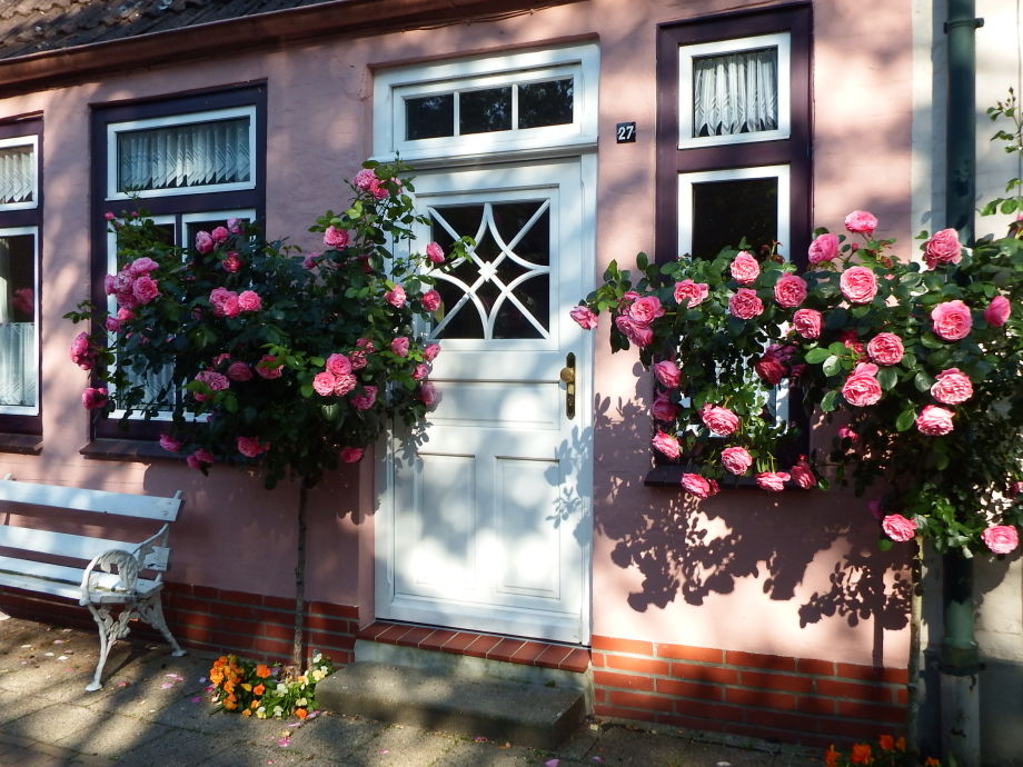 """""""Cornelius Hansen"""": Pretty roses in the summer"""