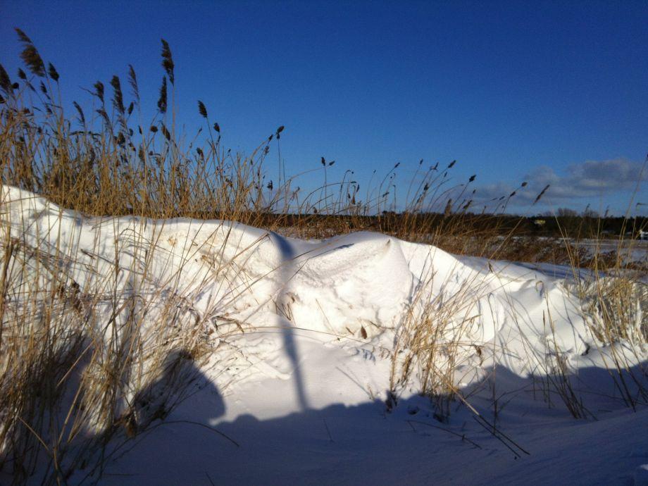 winterliche Salzwiesen