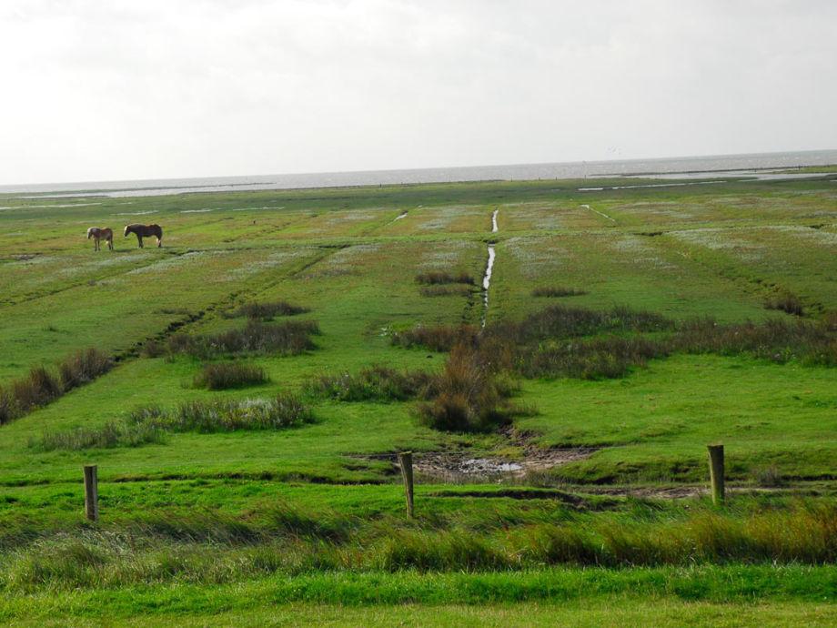 Ausblick auf die Salzwiesen