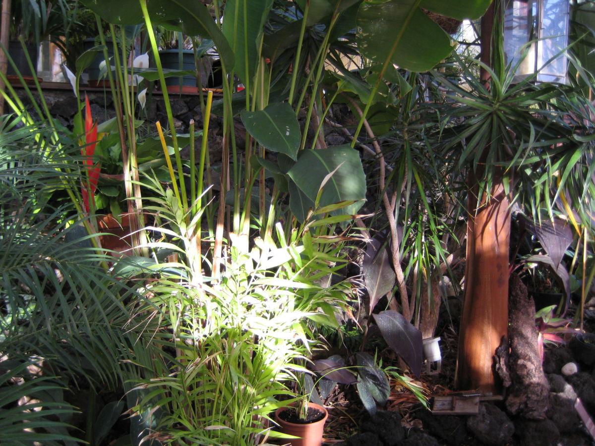 ferienhaus hacienda tropicana la palma herr manfred krumrey. Black Bedroom Furniture Sets. Home Design Ideas